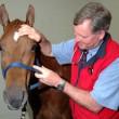Hur man ger homeopatisk medicin till en häst