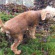 Agneta frisk av homeopati och hunden fick pälsen och livsgnistan tillbaka
